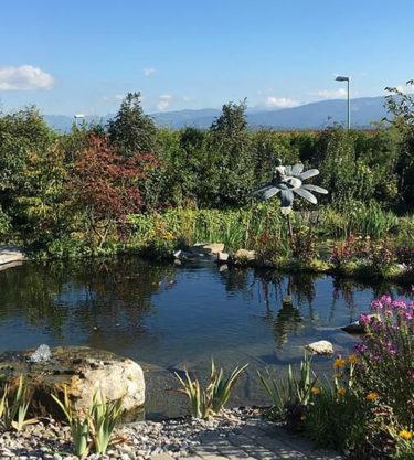 Aménagement jardin avec étang